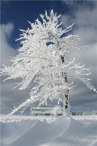 Hoarfrost. Now this might be worth living in a cold climate to see. Very pretty!