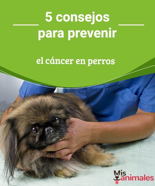 5 consejos para prevenir el cáncer en perros  Ten en cuenta estos consejos para prevenir el cáncer en perros, una enfermedad que, detectada a tiempo, hoy puede ser curable. #salud #cáncer #prevenir #perros