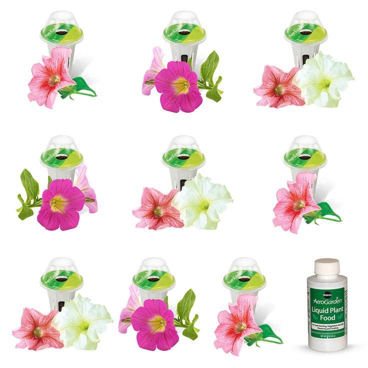 Miracle-Gro AeroGarden Cascading Petunia 9-Pod Seed Kit, Multicolor