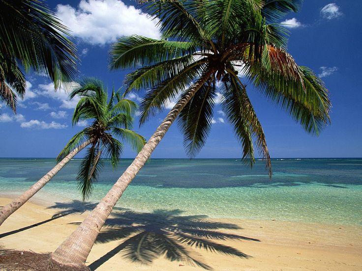 Die Besten 25 Coconut Palm Tree Ideen Auf Pinterest