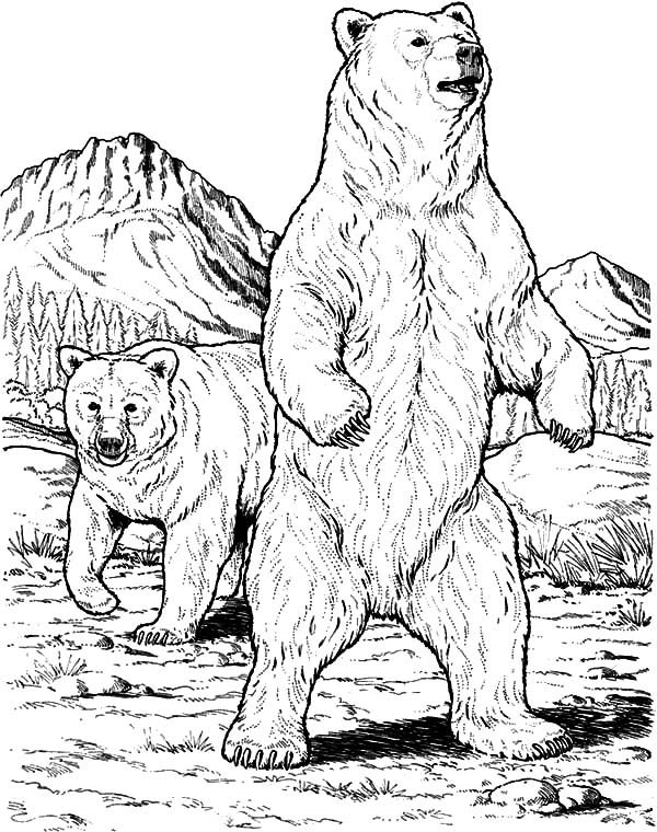 Angry Grizzly Bear Coloring Pages Free & Printable