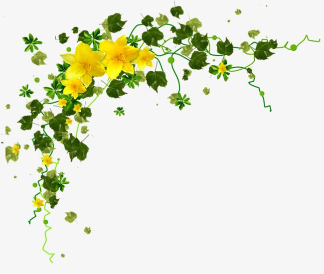 Yellow Flower Petals Green Leaves Png And Clipart Digital Flowers Flower Border Flower Backgrounds