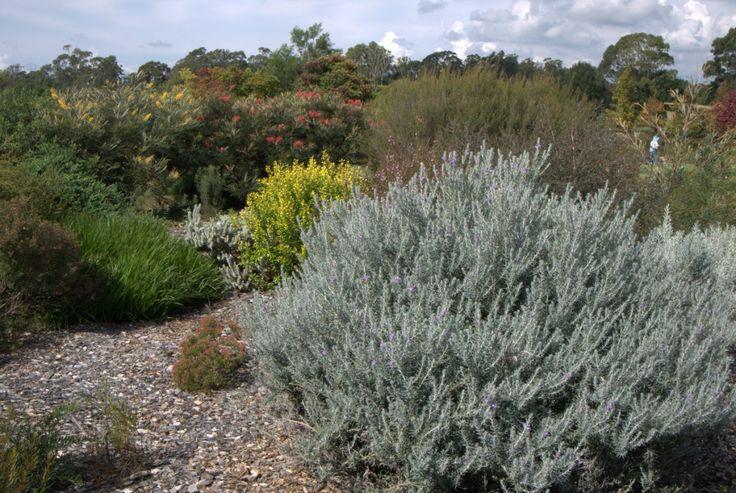 Silky Oaks: Peter and Margaret Olde