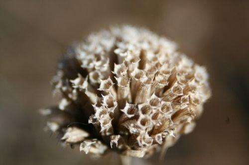 Blumenwiese aus Wildblumen im Garten selber anlegen  - #Gartengestaltung