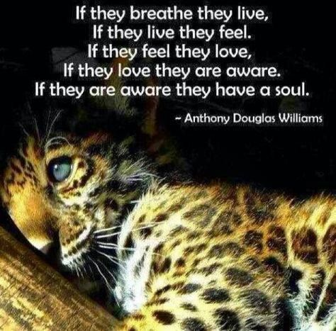 If they breathe they live ...feel...love...are aware...have a soul From the Rainforest Site on Facebook