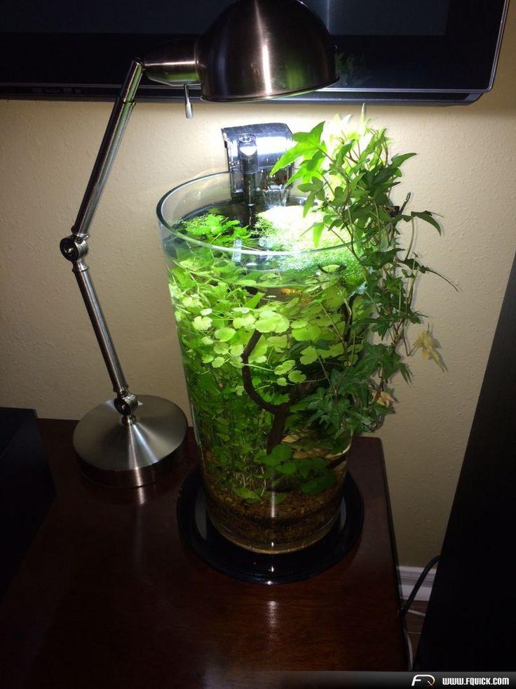 25 best ideas about vase fish tank on pinterest round for Vase aquarium rond