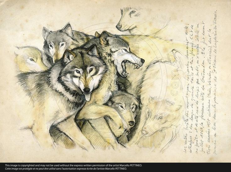 n°25-Loup