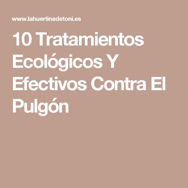 10 Tratamientos Ecológicos Y Efectivos Contra El Pulgón