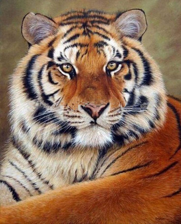 1.99 GBP - 5D Diy Diamond Painting Tiger Animal Cross Stitch Embroidery Home Decor Craft #ebay #Home & Garden | Products | Pinterest | Siberian tiger, Animals …