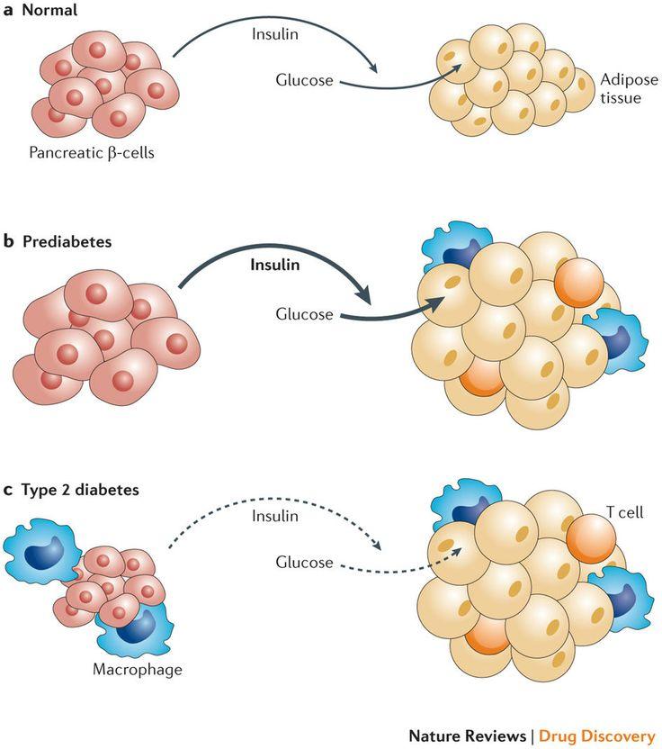 diabetes mellitus type 2 treatment guidelines 2015