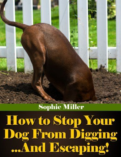 Products to stop your dog from digging