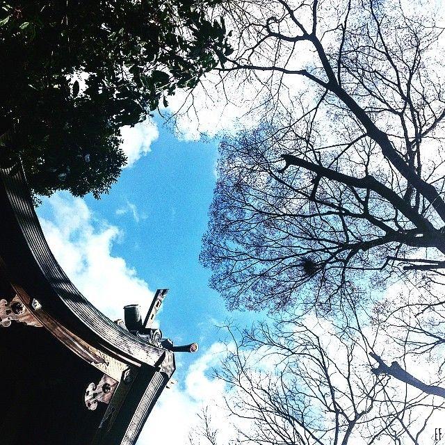 #荒井由美 さんの      #さざ波 を聴きながら       切ない恋の終わりなのに     新しい希望も感じさせる       大好きな1曲      #松任谷由実 #music #神社 #love #yumiarai   #青空 #bluesky #tree #木 #神社 #temple #ptk_japan #東京カメラ部 #photooftheday #instagramjapan #tokyocameraclub #Instagood #icu_japan #igs_asia #ig_japan #singersongwriter #songwriter #ptk_japan #worldprime #IGersJP #japan #tokyo by emifukiwai https://www.instagram.com/p/BDNKm6fMxnU/ #jonnyexistence #music