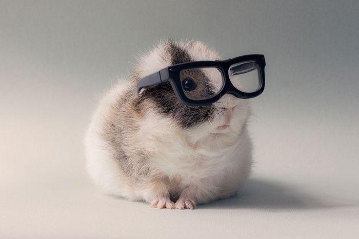 BooBoo y sus amigos conejillos de Indias son la sensación de la internet   videografoto