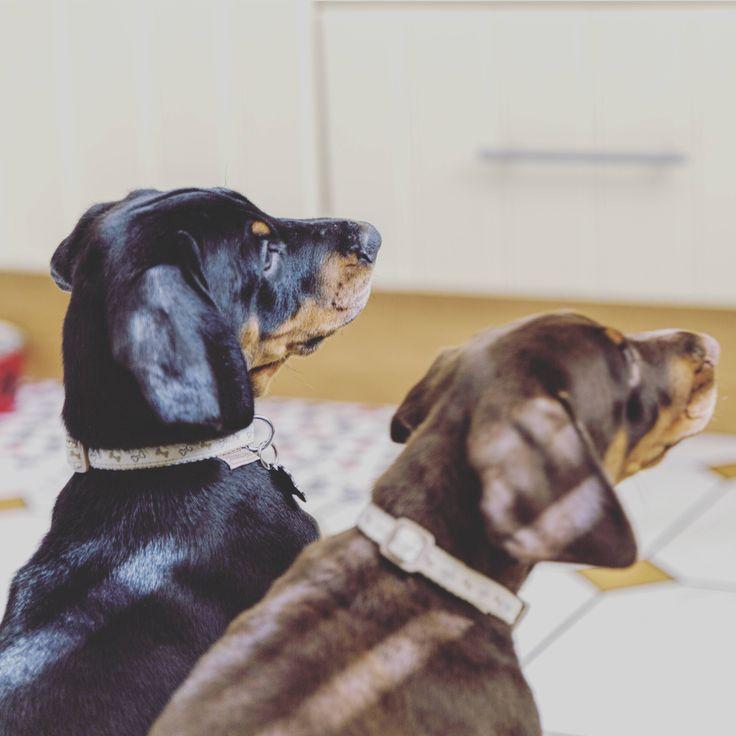 My two new family members Loki and Bailey http://ift.tt/2gT6LC2
