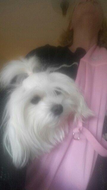 Pixie in Pixies Posh Pets sling