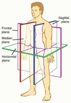 Anatomy & Physiology  A Collection of Additional Study Materials  (powerpoints, videos, notes, graphics, diagrams, worksheets, interactive websites)