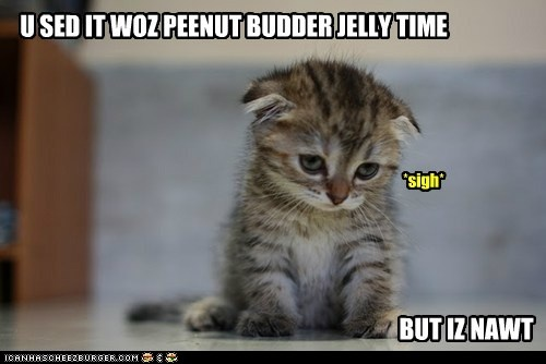 Animal Pics, Kitty Cat, Sadness Kitty, Funny Stuff, Kittens, So Funny, Peanut Butter, Jelly Time, Baby Cat