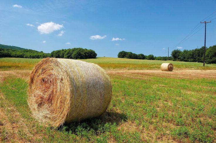 Farmland in Agios Prodromos