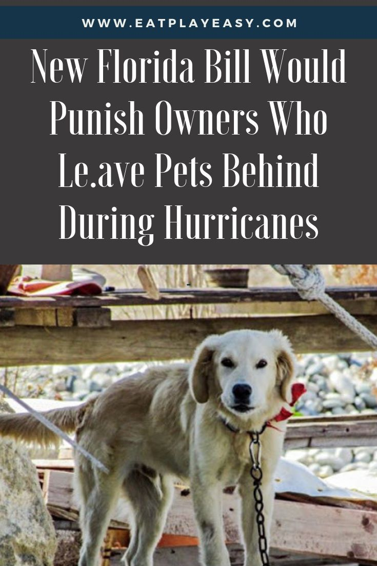 New Florida Bill Would Punish Owners Who Leave Pets Behind During Hurricanes Pets Dog Stories Dog Care
