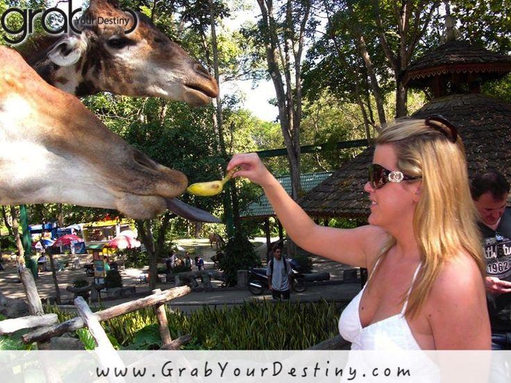 Feeding Animals At The Chiang Mai Zoo... Amazing Experience! Chiang Mai, Thailand…  #ChiangMaiZooAquarium  #ChiangMai #GrabYourDestiny #Travel #JasonAndMichelleRanaldi #Thailand #FunAtTheZoo  www.grabYourDestiny.com
