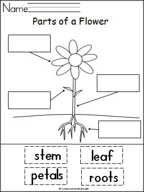Students label the parts of a flower with this free cut and paste activity.  Perfect for spring garden units.