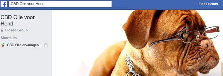 Word lid van de Facebook groep 'CBD olie voor hond'  Heb je vragen over of ervaring met het gebruik van hennepzaadolie of CBD olie voor huisdieren? Laat zeker van je horen! Door erover te praten, helpen we elkaar om onze honden, katten en paarden gelukkig en gezond te houden.
