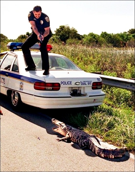 Stay where you are!: Laughing, Guns, Funny Pics, Spiders, Cops, Police, Funny Pictures, Gators Boys, Funny Stuff