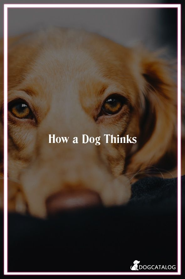 How A Dog Thinks By Itimepets Info Relationships Life