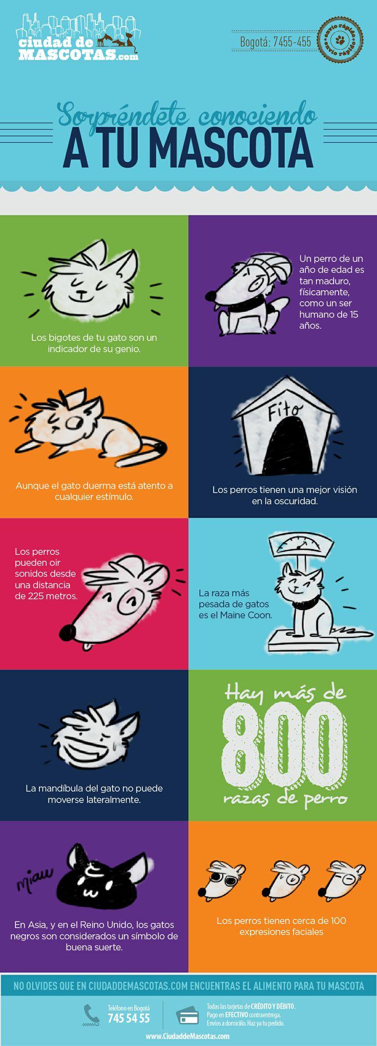 Tus perros y gatos son seres únicos que te sorprenden a diario con sus curiosidades. Te invitamos a descubrirlas.