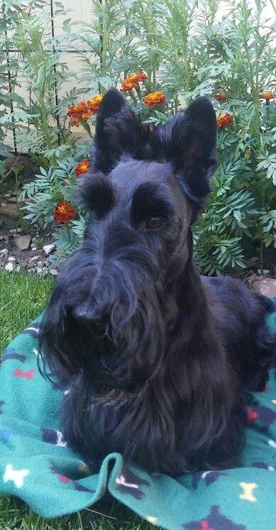 Bentley ❤❤❤ cachorro da Coraline