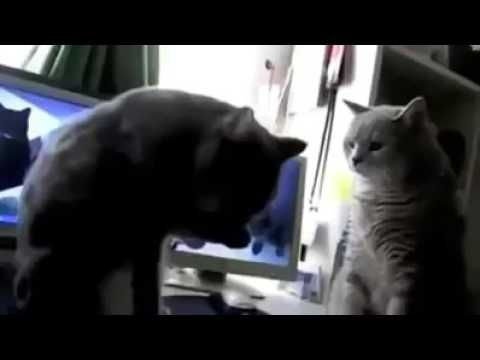 Liked on YouTube: Funny two cats Funny two cats   subscribe for more videos:  funny animal video funny videos funny animals funny cats funny cat video funny pranks funny dog videos animal videos funny funny funny babies funny dogs animal videos funny baby videos funniest animal videos funny animal clips animal attacks funny stuff funny commercials cary videos funny animal attacks animal funny animal video cute animal videos animal funny videos sneezing panda talking dog funny monkey videos…