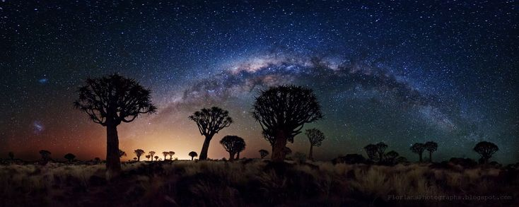In front of a famous background of stars and galaxies lies some of Earth's more unusual trees. Known as quiver trees, they are actually succulent aloe plants that can grow to tree-like proportions.