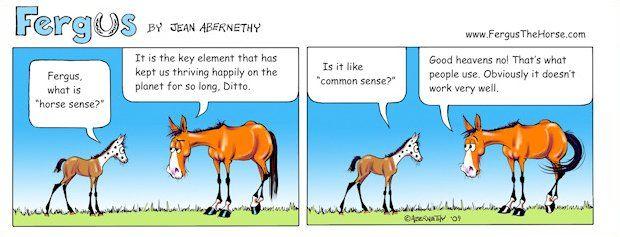 We just love Fergus! Today's lesson - Horse Sense vs. Common Sense