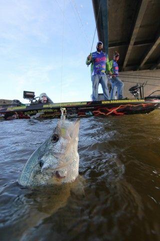 Learn How To Catch Crappie Around Bridges With Bnm Poles Pro Staff