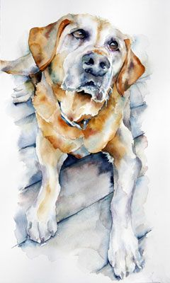 Watercolor, I love the dedication and loyalty in his eyes. So well done. Yellow Labrador Retriever.