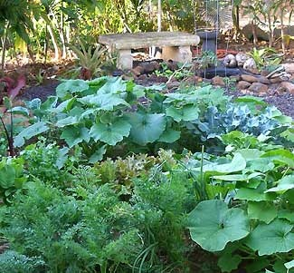 Plant a food forest, right in your own backyard.
