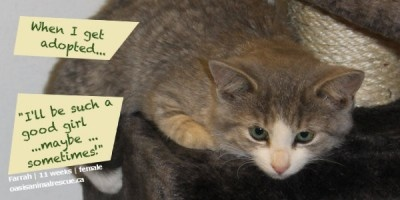 Farrah is 11 weeks old. Born in a workshop! Now searching for her forever home.  oasisanimalrescue.ca