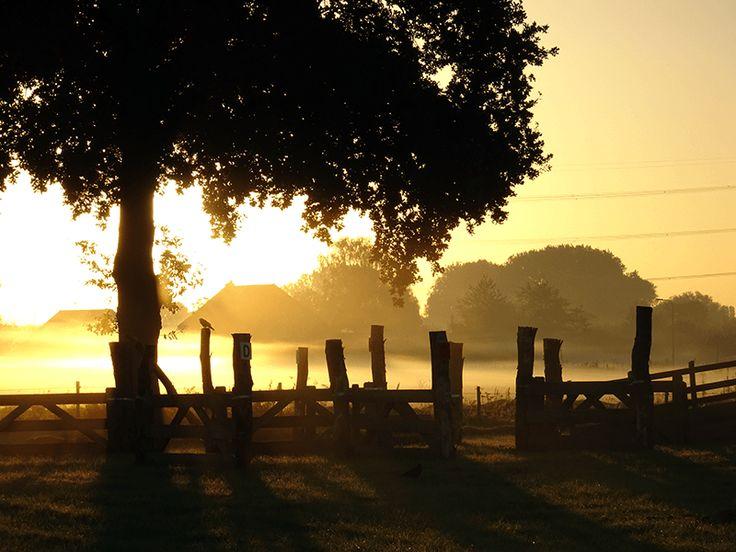 De vroege ochtenden in de natuur vind ik het allermooist. De opkomende zon die een warme gloed spreidt over de net ontwakende wereld.