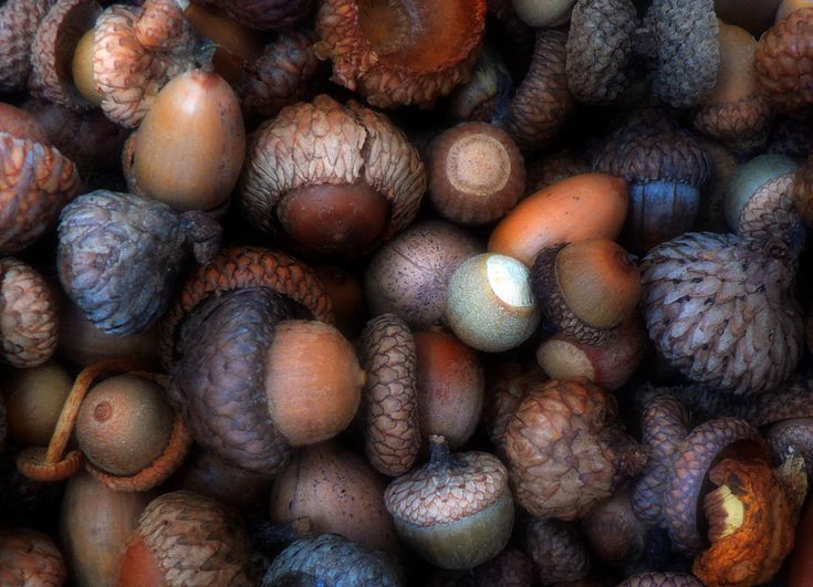 Autumn still life with acorns. This would be a great way of teaching texture drawing/shading to my students.