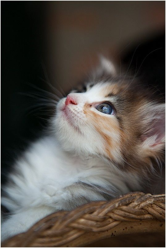 Gorgeous Tom Kitten Grey And White Ready To Go: 1000+ Images About Cute Kittens On Pinterest