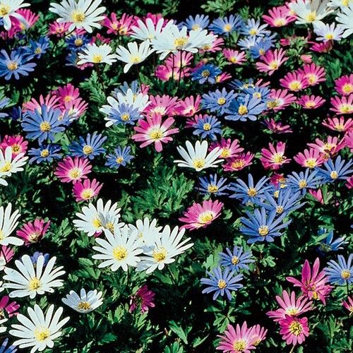 17 Best Images About Plant Id Groundcovers On Pinterest