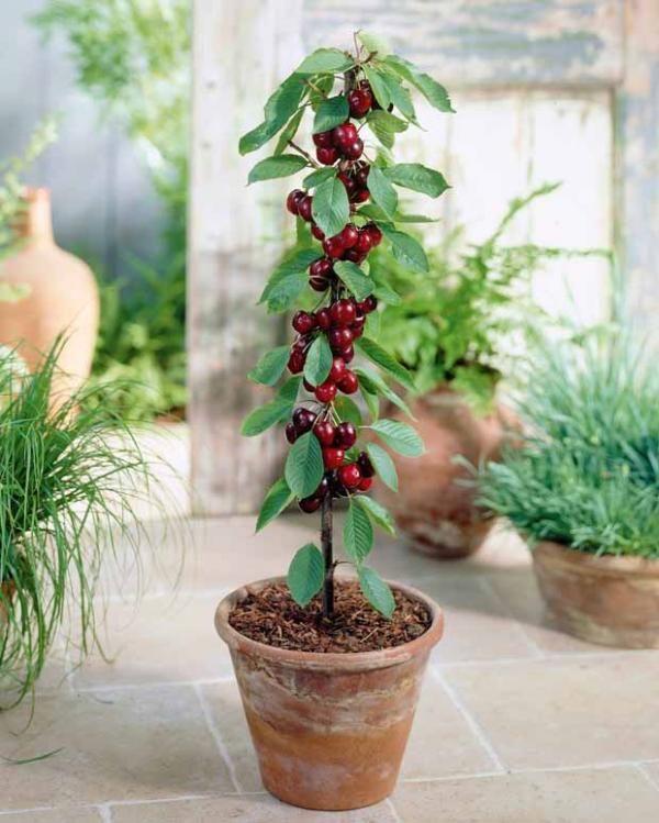 Les 36 meilleures images propos de mini plantes pour petit jardin sur pinterest jardins - Petit jardin graines et plantes le havre ...