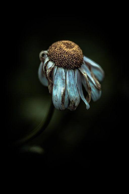 Flower (Alan Shapiro) | Flowers | Pinterest ...