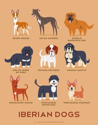 Dogs of the World - Iberian breeds
