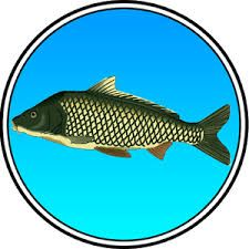 True Fishing mod apk download latest version update. Free unlimited Android game apk mod True Fishing mod apk free download.