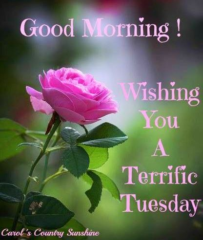 Good morning! via Carol's Country Sunshine on Facebook tuesday