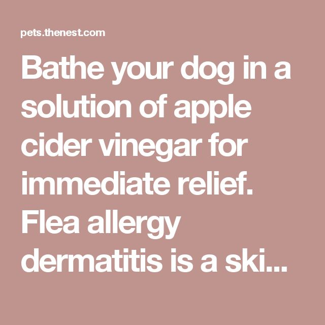 Bathe your dog in a solution of apple cider vinegar for immediate relief.  Flea allergy dermatitis is a skin rash caused by an allergic reaction to flea bites. The allergy causes immediate inflammation of the skin, followed by itching and rawness. Dogs can develop such a rash from a single flea bite; in some cases even if the fleas are eliminated the condition can persist.  Sponsored Link Do you have hives? We have an app that can help TARGET My Hives. Download now itunes.apple.com Apple…