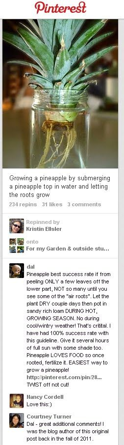 How to grow a pineapple from just the top, or the crown.