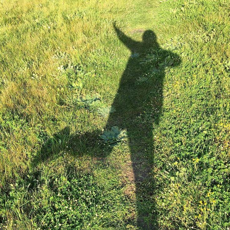 Dancing shadows flowers and fauna. #hometownglory