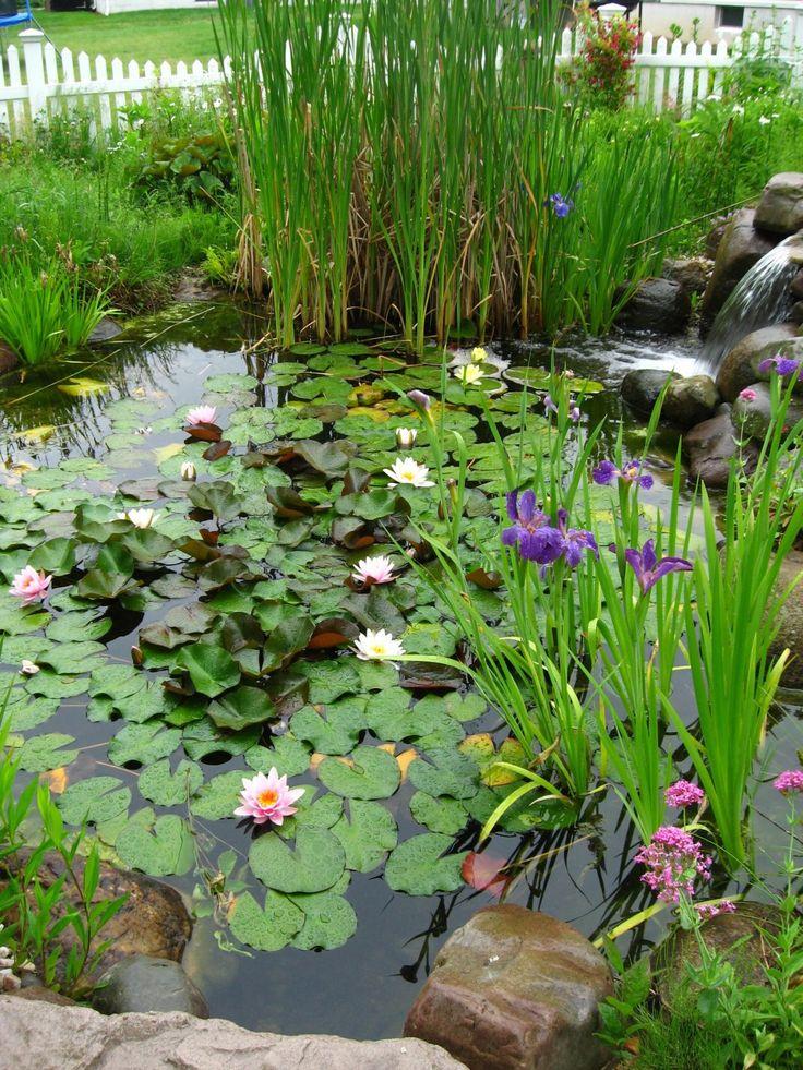 Декоративные растения в пруду